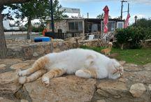 CYPRUS CATS / #cyprus_cats #chipre_chats #кипр_котики #cyprus #кипр_рутешествие #фото_кипр