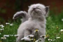 The cutenest factor