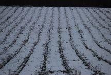 Lavender Field -  Winter 2015 / O branco que purifica o violeta que transcende