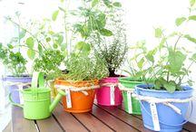Plantas: Mini Horta em Casa / Visite www.thyaraporto.com/blog e confira ótimas dicas para decorar a sua casa.