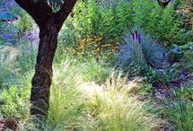 California Native Gardens and plants i love / California native plants