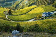 Domaine Rouvinez / Visite du vignoble et des chais au Domaine Rouvinez en Valais Réservez avec winetourbooking.ch
