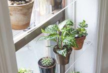 :: indoor gardening
