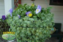 STEPABLE Containers / Make your containers stand out by adding STEPABLE plants to create that one of a kind piece of art in your garden.