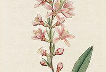 herbarium prints