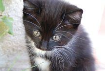 Zo zag Mijntje er ook uit toen ze nog klein was / Kitten