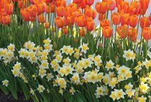 tavaszi virágoskert