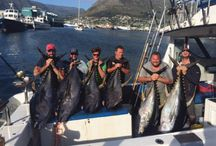 Catches off Cape Town / Fish Caught off Cape Town Waters by Xtreme Fishing Charters www.xtremecharters.com