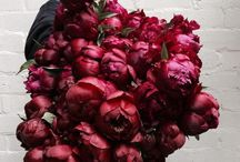 Perfect Peonies / Who doesn't love peonies? These gorgeous flowers are fragrant and voluminous, making them a popular bridal choice! Learn all about the different types of peonies, peony bouquets and keeping peonies fresh!