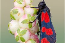 Insects / by David Wiegand