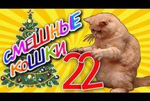 Funny Animals / Funny animals. Funny cute animals. Funny animals pics. Funny animals videos. Funny cats. Funny cats video compilations. Fynny dogs. Funny dogs videos. Funny dogs video compilations. Приколы с животными, забавные животные, смешные кошки, смешные коты, животные и дети