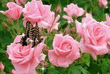 Květiny, motýlci