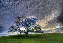 trees and moons / by Bobbie Morgan