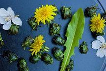 Spiselige blomster og urter