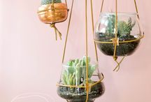 Garden - Indoors / Beautiful ways to display the plants inside the house.