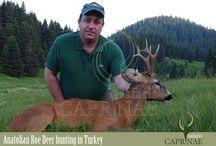 Anatolian Roe Deer hunting in Turkey