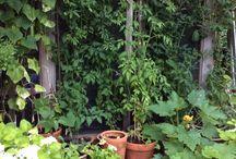 Our garden onze tuin