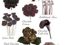 Flowers-05 Names / Научные и бытовые названия цветов, декоративных и дикорастущих растений