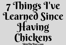 SkipTheBag Chickens