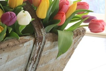 Easter & Spring Ideas / by Karen Jorgensen