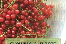 Growing Fruits&Berries