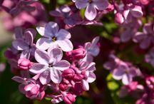 Flowers / Blumen Photography / Pinne alles woran das Auge und das Herz sich sehr gerne erfreut und erinnert ... #Blumen #Foto #Photography #Flowers #Herz #Sinne #Internet #Marketing #Image #Aufbau #Präsenz #SocialMedia #Imageaufbau  http://saraha-social-web.de