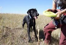 Working Dogs for Conservation / West Paw Design supports Working Dogs for Conservation.