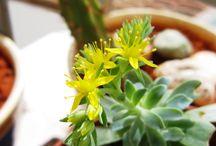 Πρασινάδα στο μπαλκόνι! / Φυτά, λουλούδια, διακόσμηση, στιγμές χαλάρωσης στο μπαλκόνι