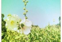 California Love / Bringing a little California sun into your lives!