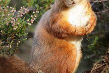 Squirrel with good postostore