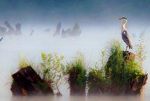 wildlife / by laviyenroz