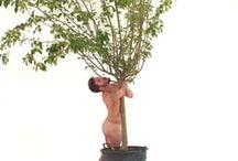 DANCING WITH TREES / DANCING WITH TREES - BAILANDO CON ARBOLES BIONIC DANCE - DANZA BIÓNICA