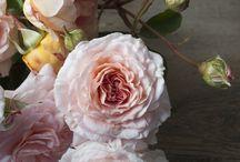 Garden Flowers / Gardening and flowers