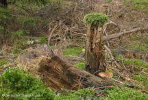 Wald. / Alles rund um Wald, Bäume und die vielen Luft zum Atmen drumrum (All about trees and forests - go out into the woods.)