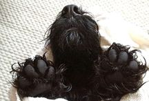 Dogs / by Quirine ten Cate