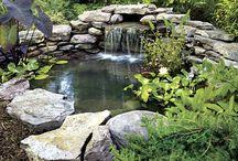 Ponds and pool