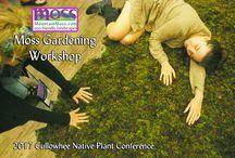 Moss Gardening Workshop
