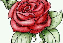 rosas s