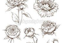 пионы и цветы