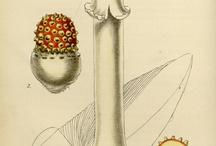 Botanische tekeningen