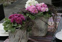 Blumen, Garten, Deko&Co:)