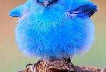 Uccelli / Uccelli
