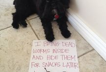 Animals Behaving Badly / by Megan K