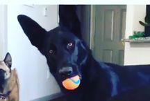 Dog Lover Videos https://scontent.cdninstagram.com/vp/0aa9f7af1fc1739cf669b70698d3b3f3/5A79DFC7/t51.2885-15/e35/26867365_154860565172412_6056889075548291072_n.jpg