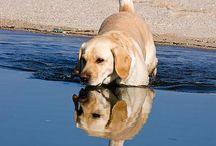 Honden / Mooie foto's
