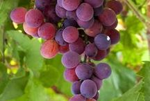 red grapes for health arteries