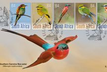 South African Bee-eaters