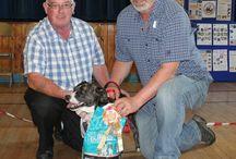 Harvest Fun Dog show 2015 / K9 Crusaders Fun dog show