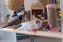 Bird Avirey