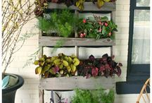 GARDENING in Containers / Growing plants in containers / by Christine B Morris
